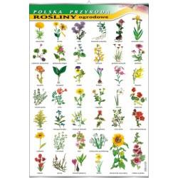 PlanszaRośliny ogrodowe - seria polska przyroda