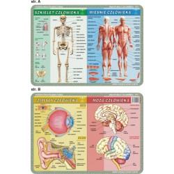 PODKŁADKA EDUKACYJNA 40x30 cm - Anatomia Człowieka/Mikrobiologia 055