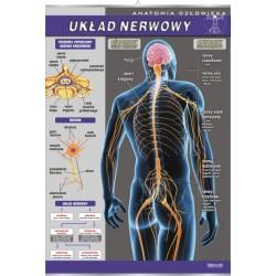 PlanszaVISUAL SYSTEM - Układ nerwowy