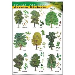Plansza VISUAL SYSTEM -Drzewa liściaste- seria polska przyroda