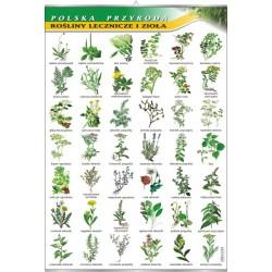 PlanszaRośliny lecznicze i zioła - seria polska przyroda