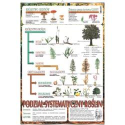 PlanszaSystematyka roślin