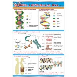 PlanszaVISUAL SYSTEM - Budowa i replikacja DNA