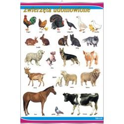 Plansza Zwierzęta udomowione