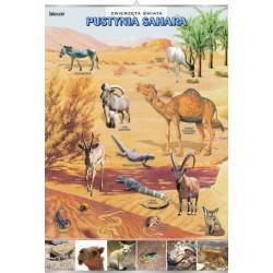 PlanszaVISUAL SYSTEM - Pustynia Sahara