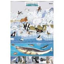 PlanszaVISUAL SYSTEM - Arktyka