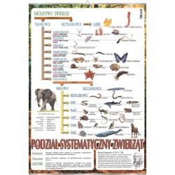 PlanszaSystematyka zwierząt