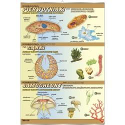 PlanszaVISUAL SYSTEM - Pierwotniaki, gąbki, jamochłony - budowa anatomiczna