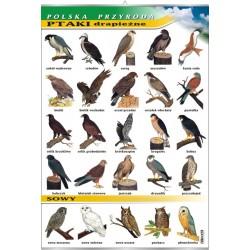 Plansza VISUAL SYSTEM - Ptaki drapieżne - seria polska przyroda