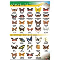 PlanszaVISUAL SYSTEM - Motyle - seria polska przyroda