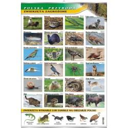 Plansza VISUAL SYSTEM - Zwierzęta zagrożone - seria polska przyroda