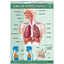 PlanszaVISUAL SYSTEM - Układ oddechowy