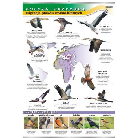 PlanszaVISUAL SYSTEM - Migracje ptaków - seria polska przyroda
