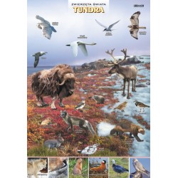 PlanszaVISUAL SYSTEM - Tundra