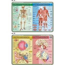 Anatomia Człowieka / Mikrobiologia